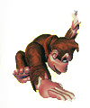 Artwork de Palmeo en Donkey Kong Country.jpg