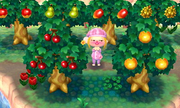 Varios árboles con fruta en Animal Crossing New Leaf.png