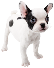 Espíritu de Bulldog francés SSBU.png