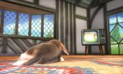Nintendog en la Casa SSB4 (3DS).jpg