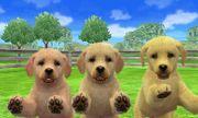 Labrador en Nintendogs.jpg