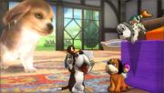 Créditos Modo Leyendas de la lucha Dúo Duck Hunt SSB4 (3DS).png