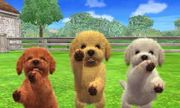Tres Caniches Toy en Nintendogs + Cats.jpg