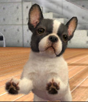 Bull dog Francés en Nintendogs & Cats.png