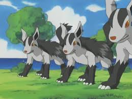 Mightyena usando doble equipo.