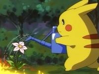 Pikachu regando una flor.