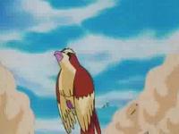 Pidgey salvaje usando ataque arena.