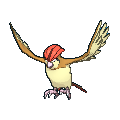 Pidgeotto XY.png