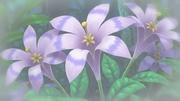 EP716 Flores.jpg