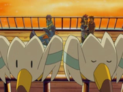 EP308 Wingull.png