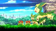 P16 Pokémon en el prado de las Colinas Pokémon.png