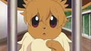 EDV01 Eevee (anime).png