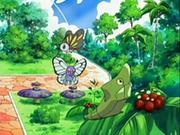 EP533 Pokémon del vivero.png