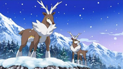EP716 Sawsbuck forma invierno.png