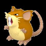 Raticate hembra