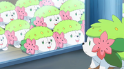 EP1071 Peluches Shaymin.png