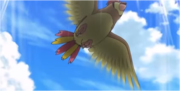 EP843 Pidgeotto(2).png