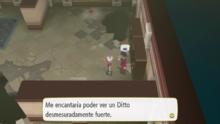 Maestro Ditto