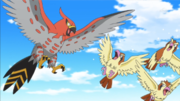 EP892 Talonflame y Pidgey.png