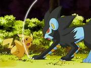 EP528 Luxray atacando a Pikachu.png