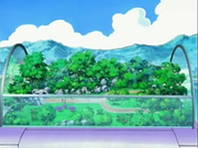 EP533 Vivero del centro Pokémon abriéndose.png