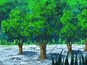 EP563 Árboles de bayas Aranja.png