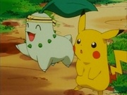 EP163 Chikorita junto a Pikachu.jpg