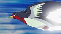 Swellow usando ataque rápido.