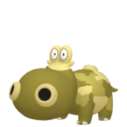 Hippopotas HOME variocolor hembra.png
