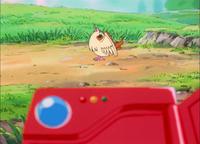EP001 Pidgey comiendo un gusano.png