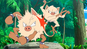 EP955 Mankey y Primeape.png