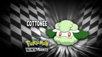 """Cottonee en el segmento """"¿Quién es ese Pokémon?/¿Cuál es este Pokémon?"""""""