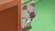EP945 Rockruff.png