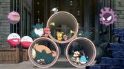P11 Pokémon de la ciudad.png