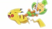 EP678 Sewaddle golpeando a Pikachu.jpg
