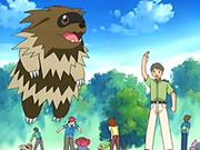 EP398 Coordinadores Pokémon (3).png