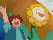 EP137 Sunflora gigante.png