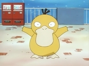 EP036 Psyduck.png