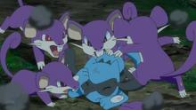 Rattata salvajes usando mordisco.