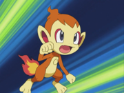 EP471 Chimchar de Polo.png