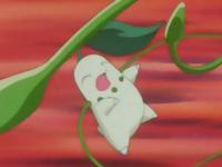 ...y se lo devuelve a la Chikorita de Ash con el doble de daño.