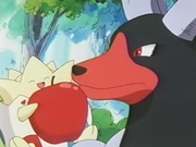 EP182 Togepi con Houndoom (3).png