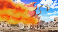 Litleo y Pyroar salvajes usando lanzallamas.