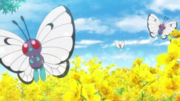 EP1092 Butterfree.png
