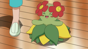 EP607 Bellossom.png