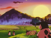 EP227 Miltank.png