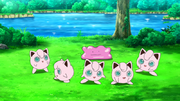 EP989 Jigglypuff y Ditto.png