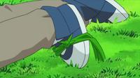Snover usando hierba lazo.
