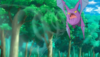 Crobat de Brock usando Supersónico.