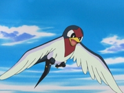 EP333 Taillow.png